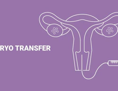 Embryo Transfer – Breaking Taboos